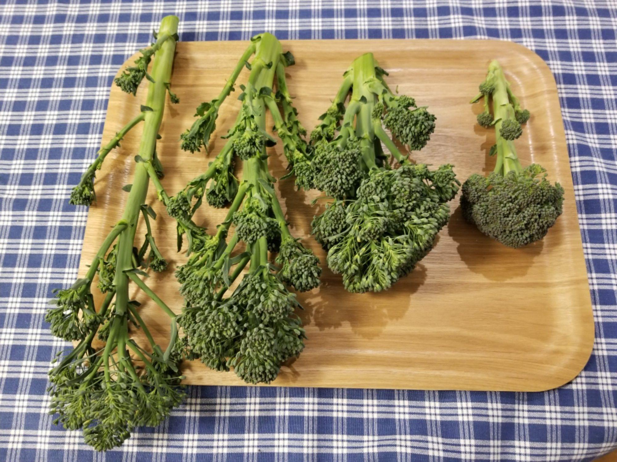 ブロッコリー 花 食べ れる